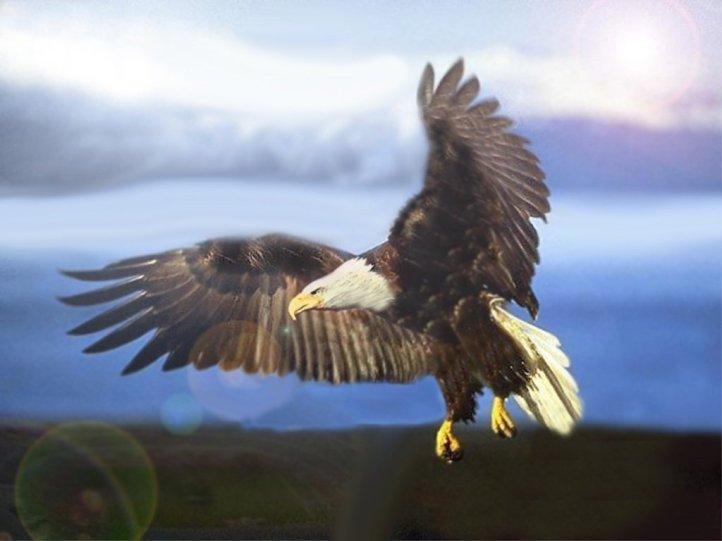 aigle contre le vent